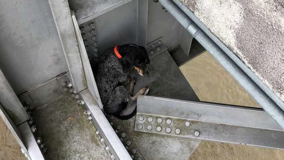 dog-bridge-rescue-1.jpg