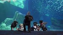 Puppies have Halloween fun at Georgia Aquarium