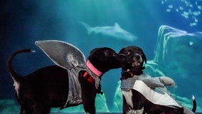 Puppies have Halloween fun with visit to Georgia Aquarium