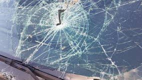 Tree falls and smashes through windshield of patrol car