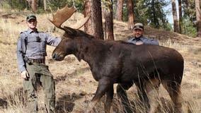 Idaho wildlife officials using lifelike decoy animals to catch illegal hunters