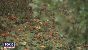 Dunwoody residents infuriated by residential deer hunting