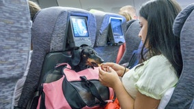 US tightens definition of service animals allowed on planes, Delta reviewing changes
