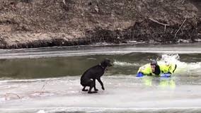 Deputies rescue dog stranded on ice chunk on North Dakota river