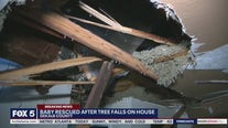Baby rescued after tree falls on house