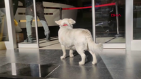 Loyal dog waits outside hospital for days while owner recovered