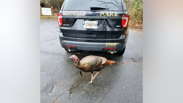 Wild turkey given warning for causing Georgia traffic jam