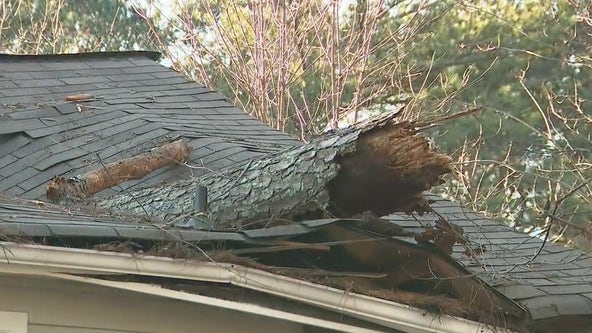 Baby girl rescued after tree falls on DeKalb County home