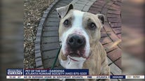 Pet of the Day from the Atlanta Humane Society