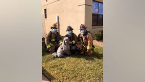'She was our hero': Prada the dog alerts owners of fire using Ring camera