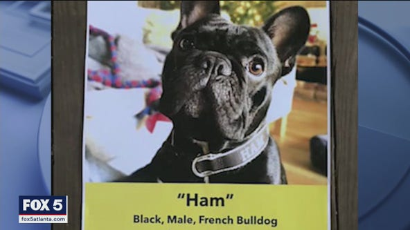 Animal activists warn of violence against metro Atlanta French bulldog owners