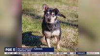 Pets of the Day with Furkids Animal Rescue & Shelters