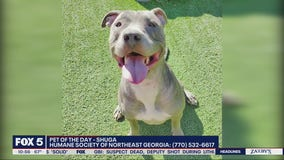 Pet of the day from the Humane Society of Northeast Georgia: