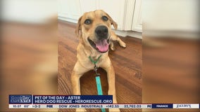 Pet of the Day from Hero Dog Rescue