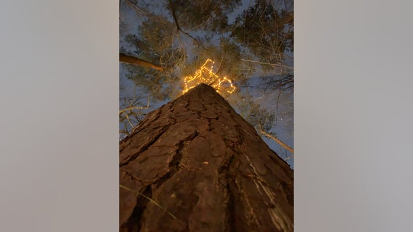 200-year-old Atlanta tree transformed into COVID memorial