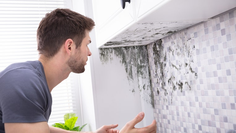 Credible-home-insurance-mold-coverage-iStock-1094164662.jpg