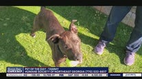 Pet of the Day from the Humane Society of Northeast Georgia