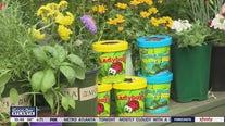 Beneficial bugs for your garden
