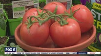 Pike Nurseries gives tips on planting tomatoes