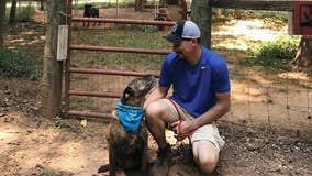 Georgia couple celebrates decade of fostering dogs