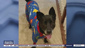 Pet of the day from Best Friends Pet Animal Society