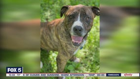 Pet of the Day with the Atlanta Human Society