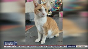 Pet of the Day from Cobb County Humane Society