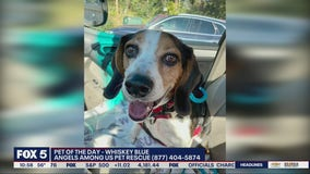 Pet of the Day from Angels Among Us Pet Rescue