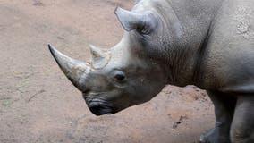 Meet Mumbles!Zoo Atlanta's big star greets guests
