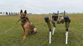 Air Force base deploys pack of robot dogs to enhance security