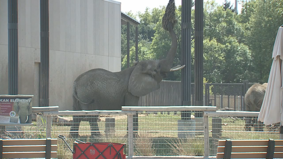 824798e6-6P-GUY-IN-ELEPHANT-ENCLOSURE-AT-ZOO-LIVE-NATVO_WIT_00.01.02.17.png