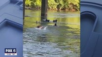 Employees save woman trapped on the Chattahoochee River