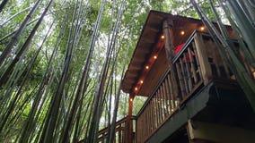 A visit to East Atlanta's famed alpaca treehouse