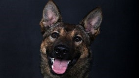 Gwinnett County K-9 dies after battle with cancer, officials say