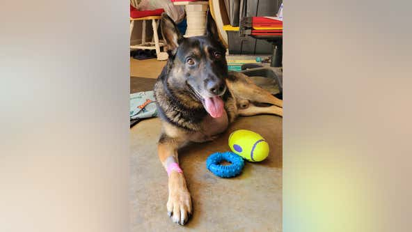 Austell K-9 officer home after leg amputated