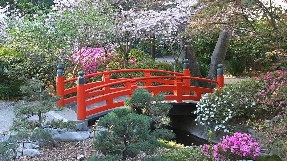 Cherry-blossoms-bloom-at-Descanso-Gardens.jpg