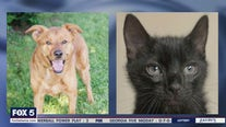 Pet of the Day from Furkids Animal Shelter