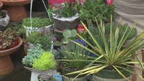 Tips on summer succulents with Pike Nurseries