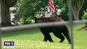 Bear visits Cherokee County subdivision, startles residents