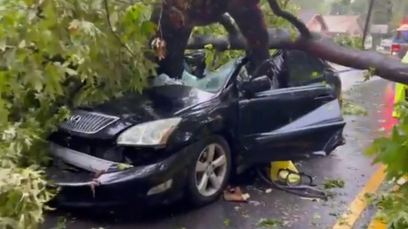 Woman pulled from car crushed by fallen tree, officials say