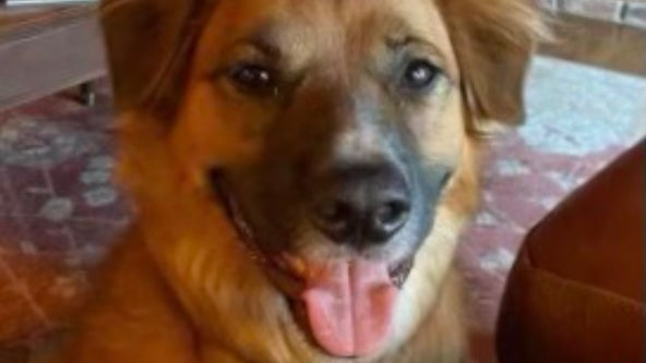 Dog ejected from car in Idaho crash found days later herding sheep