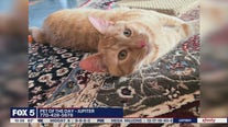 Pet of the Day from the Humane Society of Cobb County