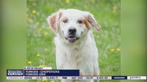 Pets of the Day from Furkids Animal Rescue