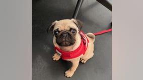$2,000 reward for safe return of pup taken during car theft in Atlanta