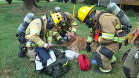 Firefighters rescue dog trapped in burning Lilburn home