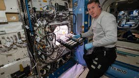 NASA astronauts growing chile peppers aboard International Space Station