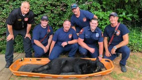 Sandy Springs firefighters share photos of black bear being relocated
