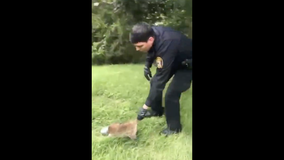 Video shows police officer rescuing raccoon with can on its head