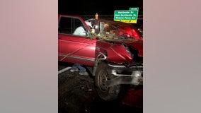 Falling tree smashes into truck on I-285