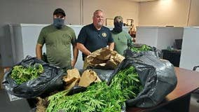 Hundreds of pounds of marijuana plants seized and destroyed in Haralson County